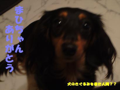 Shukushou3
