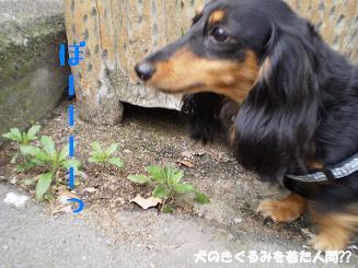 Shukushou66_3