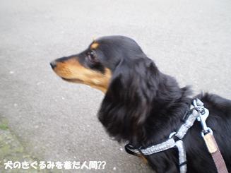 Shukushou70