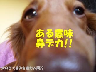 Shukushou31