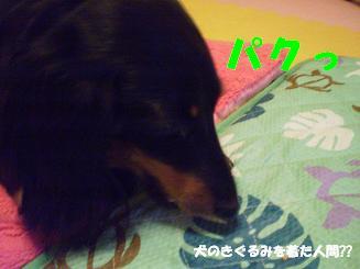 Shukushou22