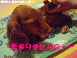 Shukushou4_2
