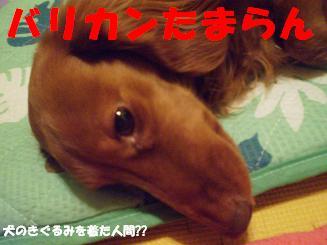 Shukushou6_2