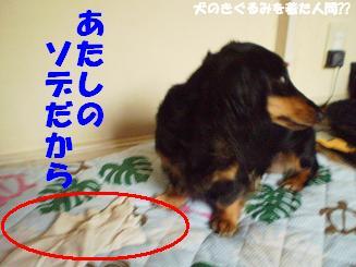 Shukushou11