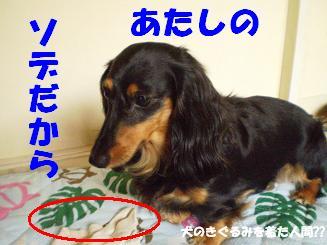 Shukushou12