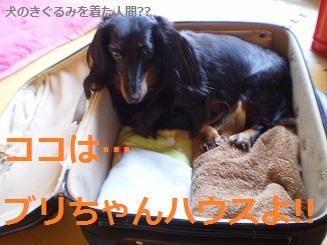 Shukushou2