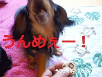 Shukushou5