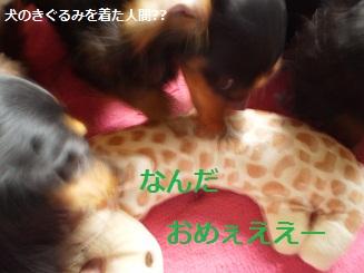 Shukushou4