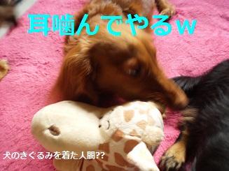 Shukushou6